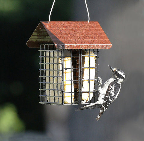 double suet feeder