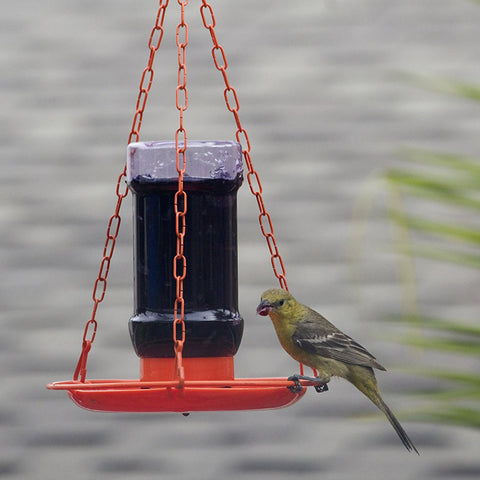 jelly feeder for orioles