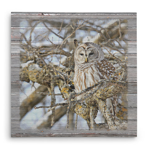 Barred Owl in Mossy Oak Tree - Canvas Print
