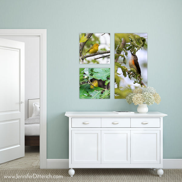 Yellow Warbler - Canvas Bird Print