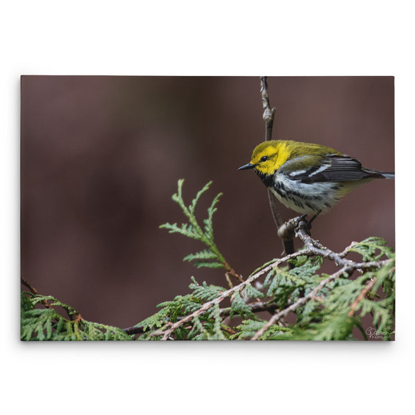 Perfectly Perched - Canvas Bird Print