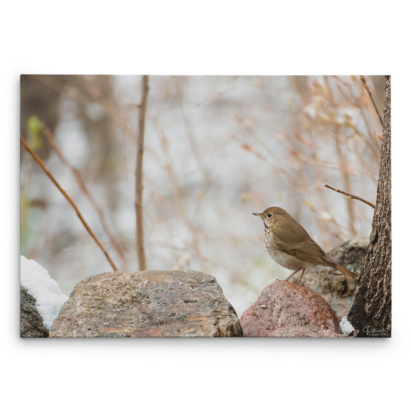 Enchanted View - Canvas Bird Print