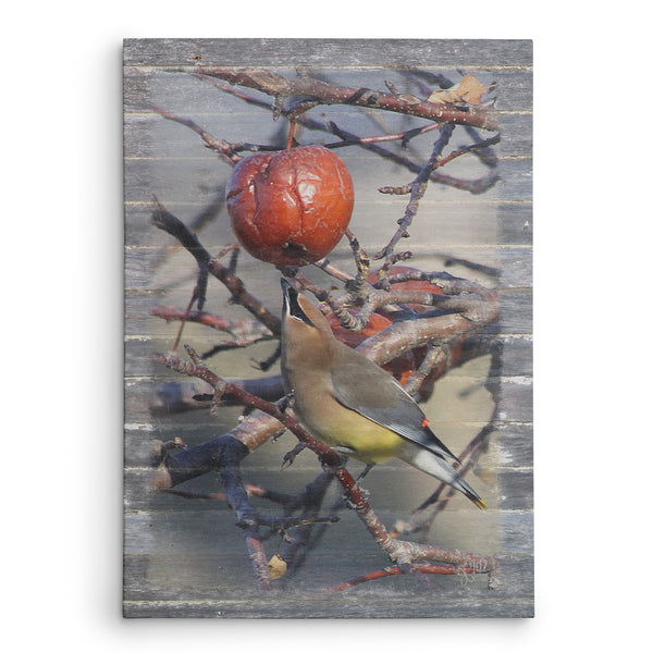 Cedar Waxwing With Apple Canvas Print