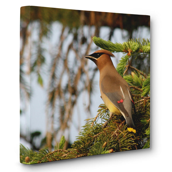 Cedar Waxwing - Canvas Bird Print