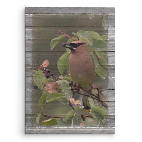 Cedar Waxwing with Berry Canvas Print