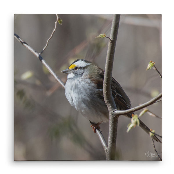 Enjoying the Sunshine - Canvas Bird Print