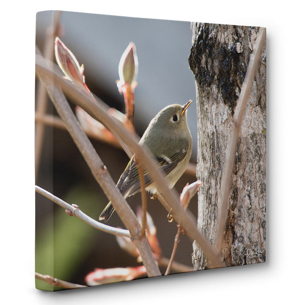 Ruby-Crowned Kinglet - Canvas Bird Print