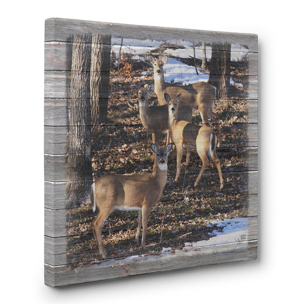 Whitetail Deer Family Canvas Print