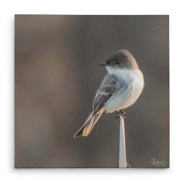 Sitting Pretty - Canvas Bird Print