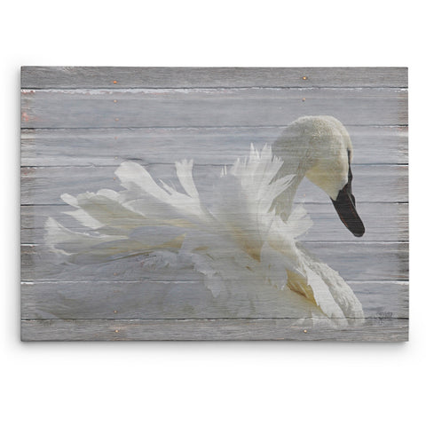 Ruffled Feathers Swan Canvas Print