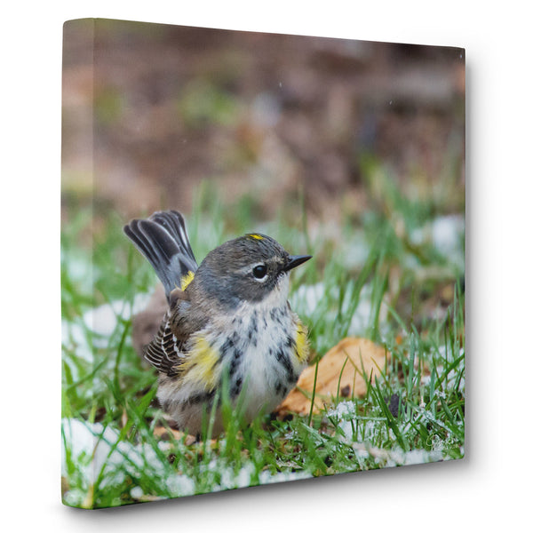 Pretty and Sweet - Canvas Bird Print