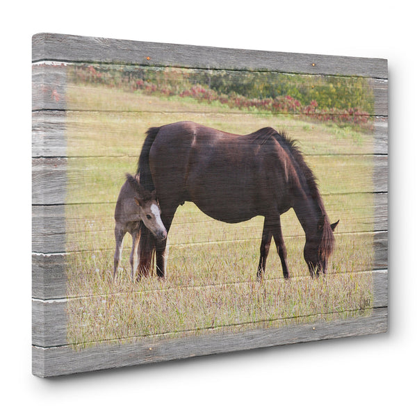 Horse and Foal Canvas Print