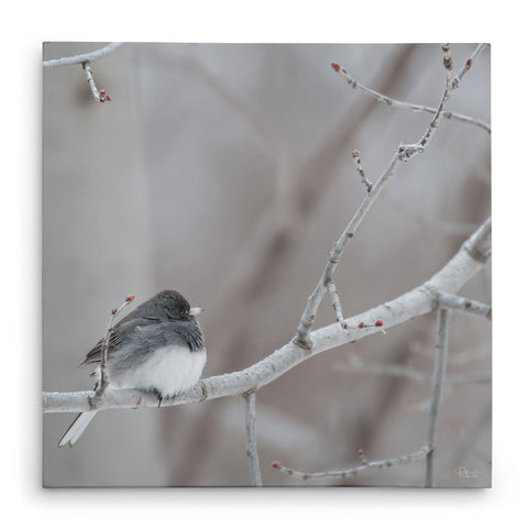 Winter Junco - Canvas Bird Print