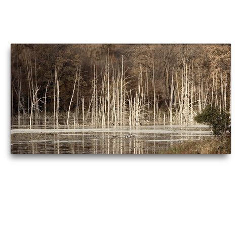 Memories of Trees Canvas Print