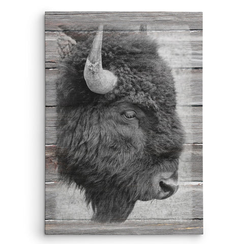 Badlands Bison Canvas Print