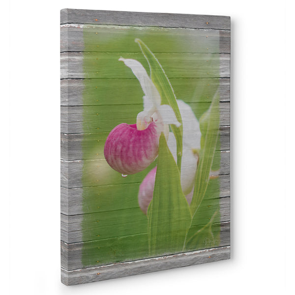 Showy Lady's Slipper Canvas Print
