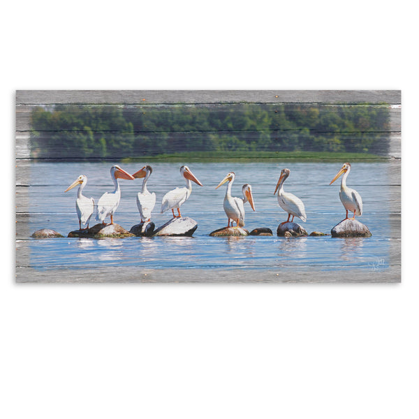 Pelican Parade Canvas Print