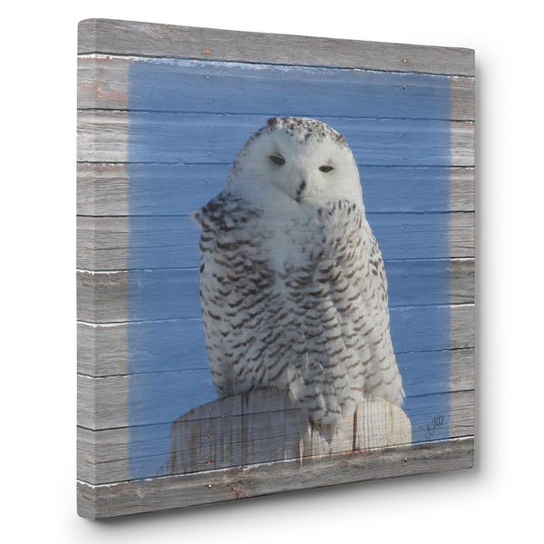 Snowy Owl Canvas Print - Keeping Watch