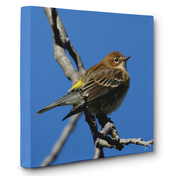 Enjoying the View - Canvas Bird Print