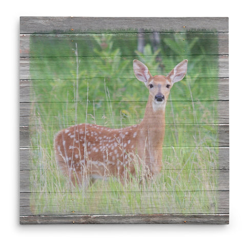 Spotted - Fawn in Spring Canvas Print