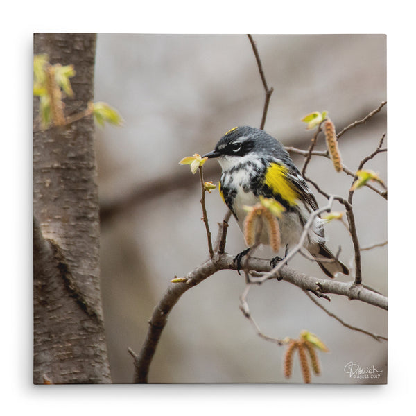 Surrounded by Spring - Canvas Bird Print