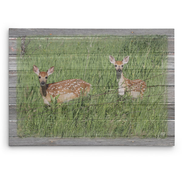 Seeing Double - Canvas Print of Twin Fawns