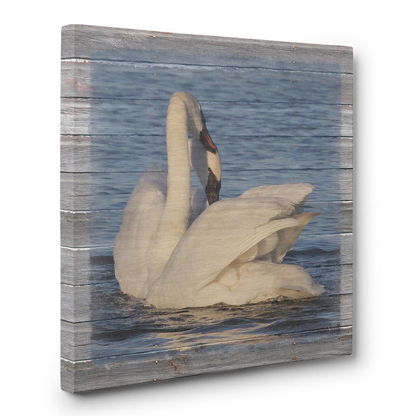 Swan Pair In Love Canvas Print
