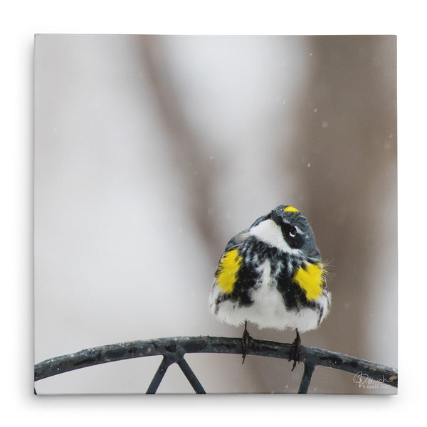 Watching It Snow - Canvas Bird Print