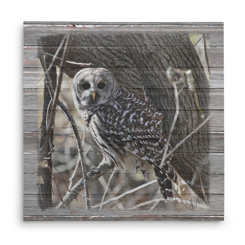 Wary Barred Owl Canvas Print