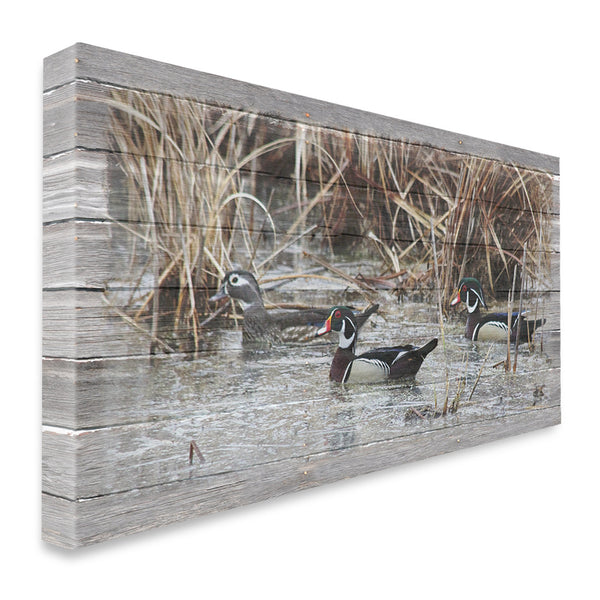 Wood Duck Trio Canvas Print