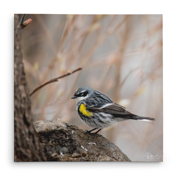 Higher Ground - Canvas Bird Print
