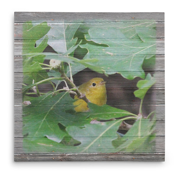 Peek-A-Boo Birdie Yellow Warbler Canvas Print