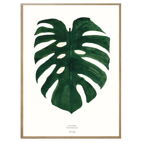 Monstera Deliciosa Print by Garmi - Green