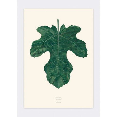Fig Leaf by Garmi