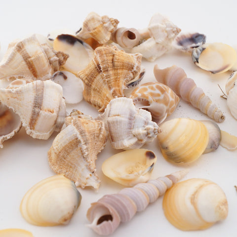 Shell Mix - Hands Craft Store
