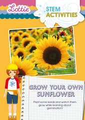 Grow your own sunflower STEM Activity