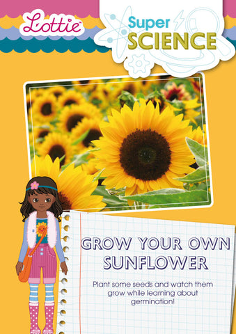 Grow your own sunflower activity for kids