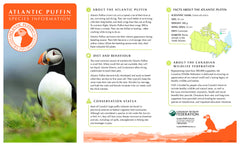 Puffin Adoption Kit|Trousse d'adoption – macareux