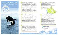 Killer Whale Adoption Kit|Trousse d'adoption – épaulard