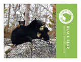 Black Bear informational brochure