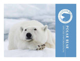 Polar Bear informational brochure