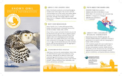 Snowy Owl Adoption Kit|Trousse d'adoption – harfang des neiges