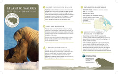 Walrus Adoption Kit|Trousse d'adoption – morse