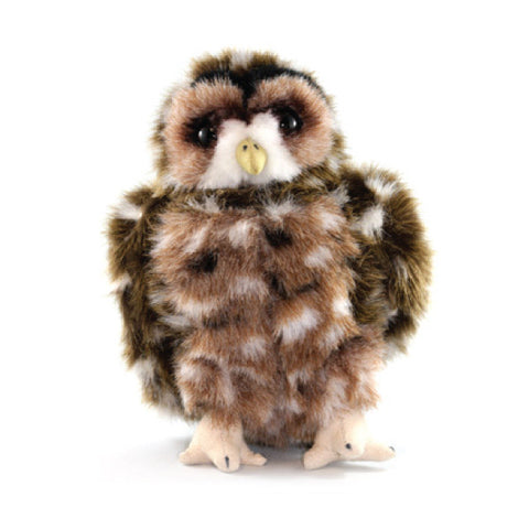 Spotted Owl adoption Kit|Trousse d'adoption – chouette tachetée