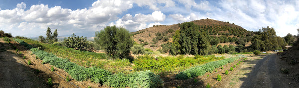 Botano Farm - One of the first biodynamic herb farms in Greece