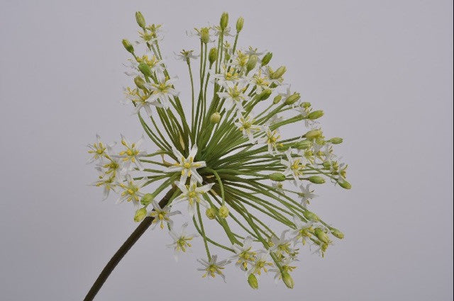 Allium Stem White 58 cm