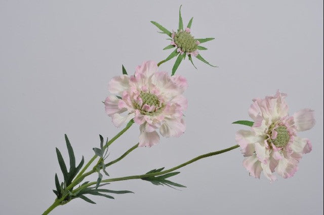 Scabiosa Spray PNK/CR 74 cm