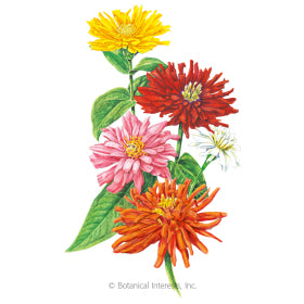 Grow The Best Zinnias