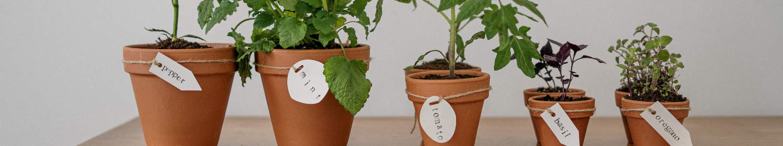 image of several flower pots with edible plants growing in them and white tags identifying the plants
