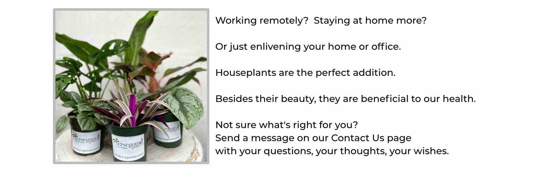grouping of houseplants with text discussing benefits of plants